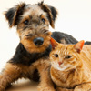 Companion Pet Care in Kingman