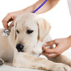 Preventative Pet Care in Kingman