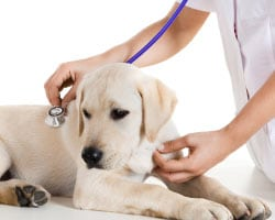 Kingman Vet Annual Pet Exam