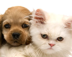 Kingman Vet Puppy Kitten Plans
